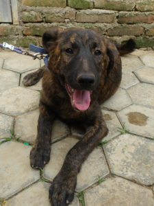 Dogs For Adoption – Community Dog Welfare Kopan